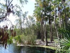 Non loin de Katherine, une journée de repos...Hot spings de Mataranka. Territoire du Nord
