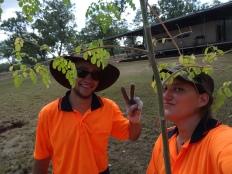 Job pour déplanter et replanter des arbres